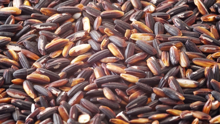 gạo nếp cẩm đà nẵng
